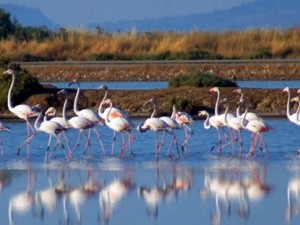 Evros river birds